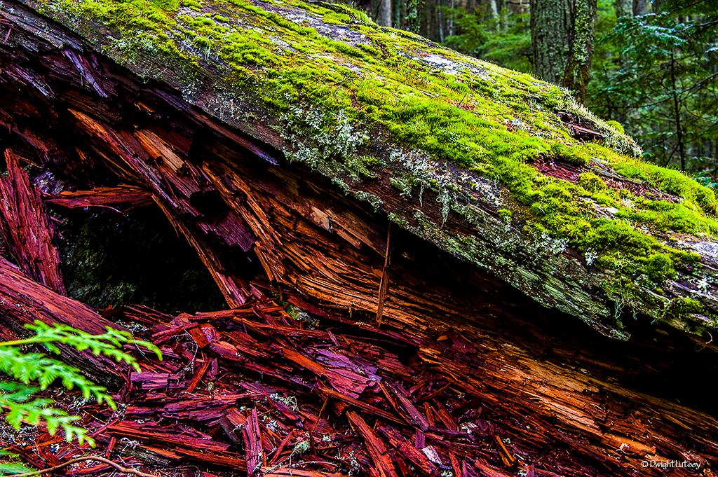 Color of Cedar