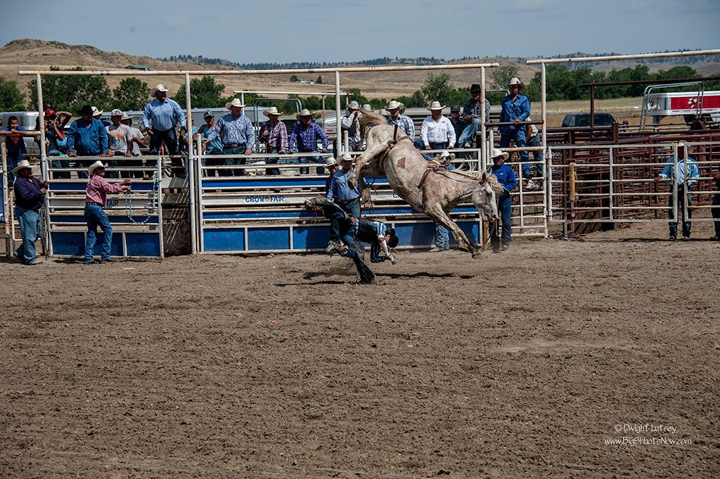 CrowRodeo3737