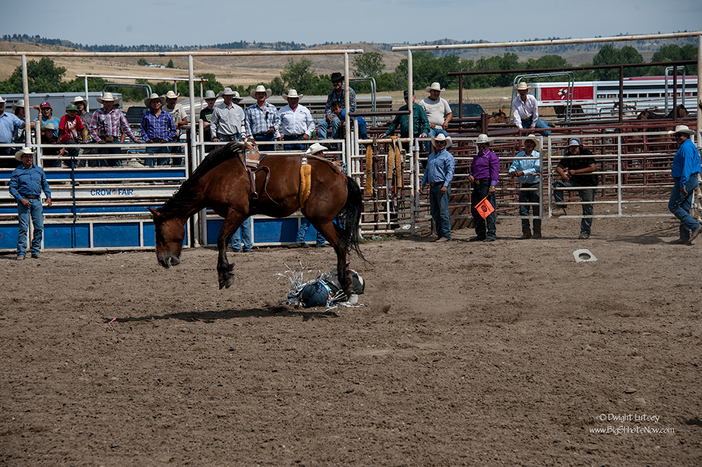 CrowRodeo3797