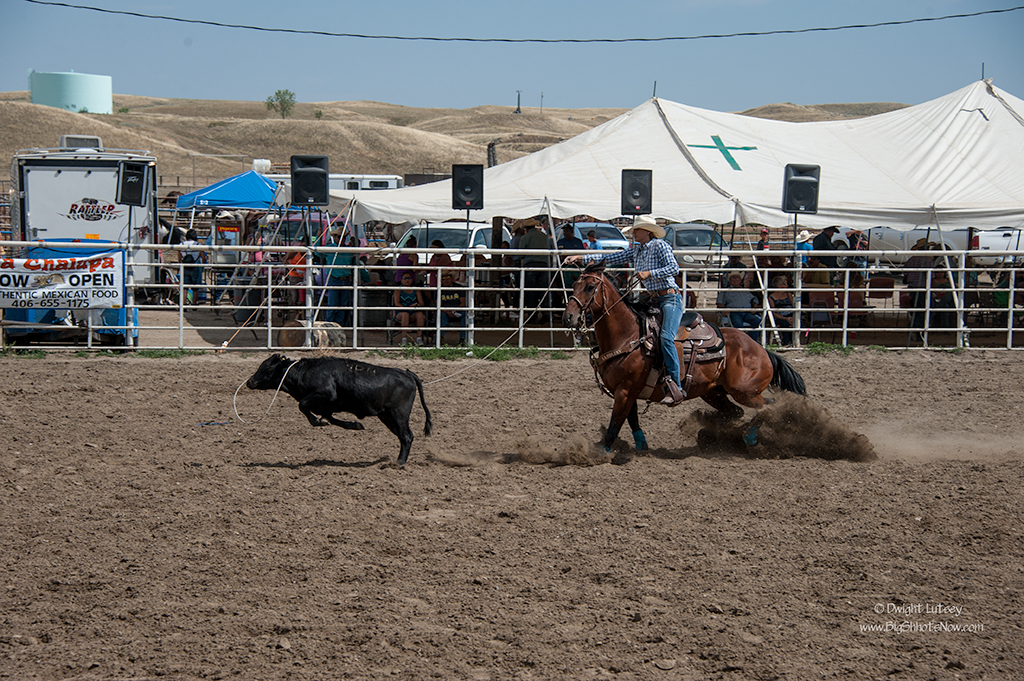 CrowRodeo3880