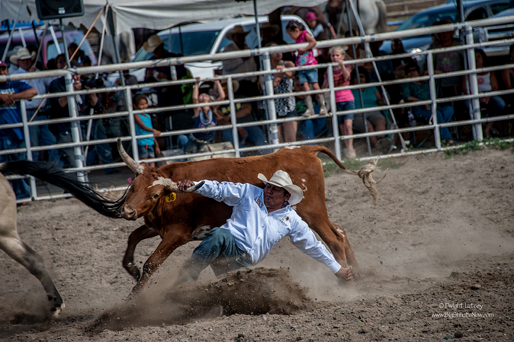 CrowRodeo4133