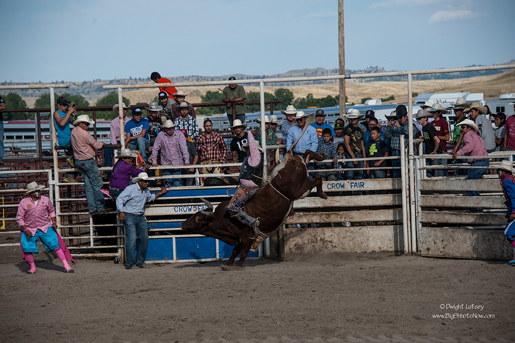 CrowRodeo4260