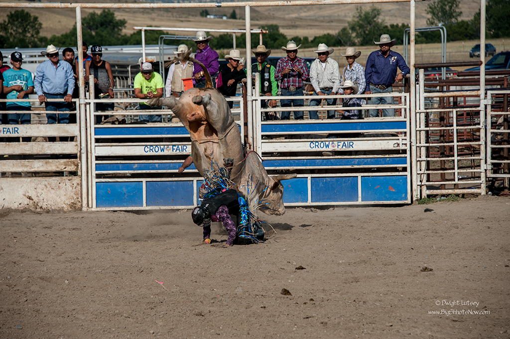 CrowRodeo4290