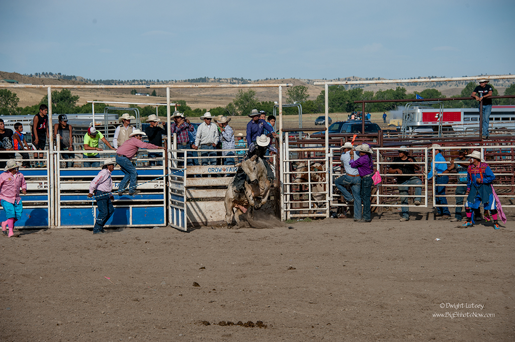 CrowRodeo4298