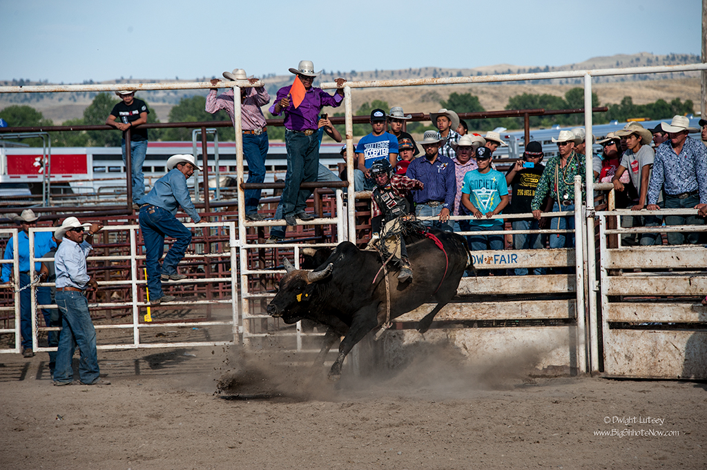 CrowRodeo4318