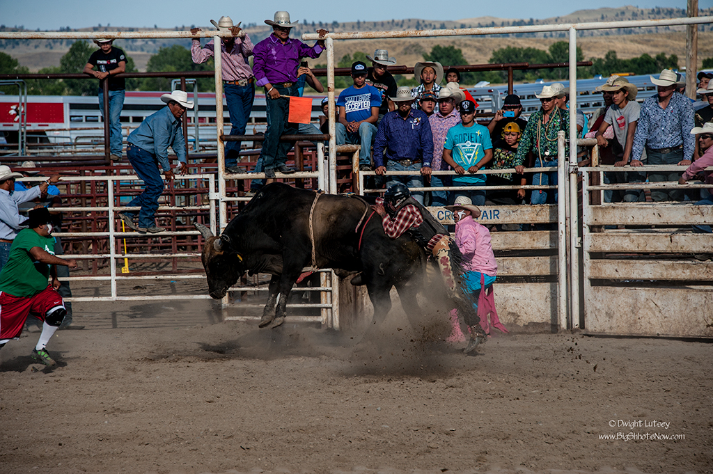 CrowRodeo4329