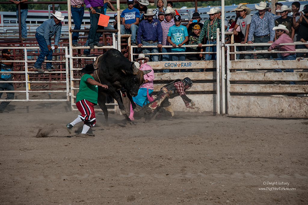CrowRodeo4331