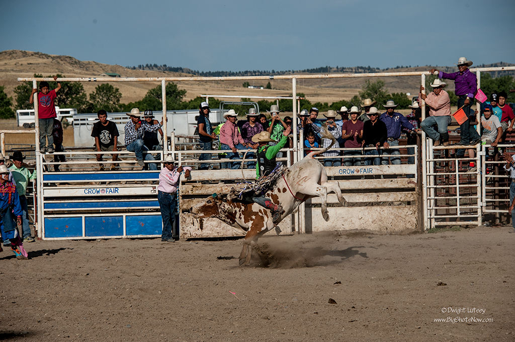CrowRodeo4384