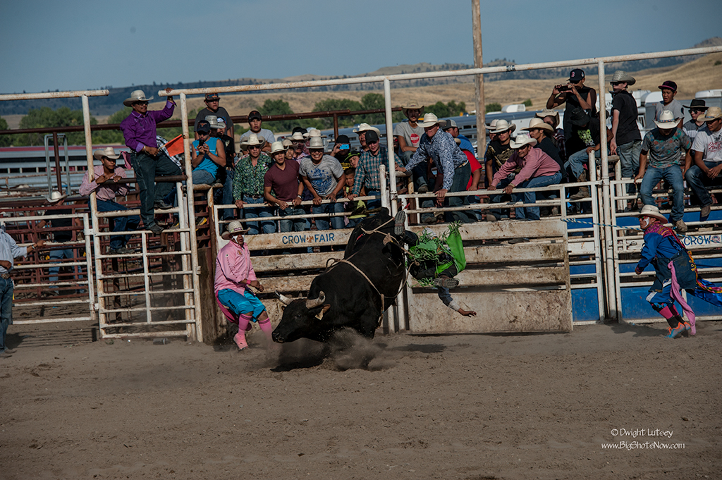 CrowRodeo4406