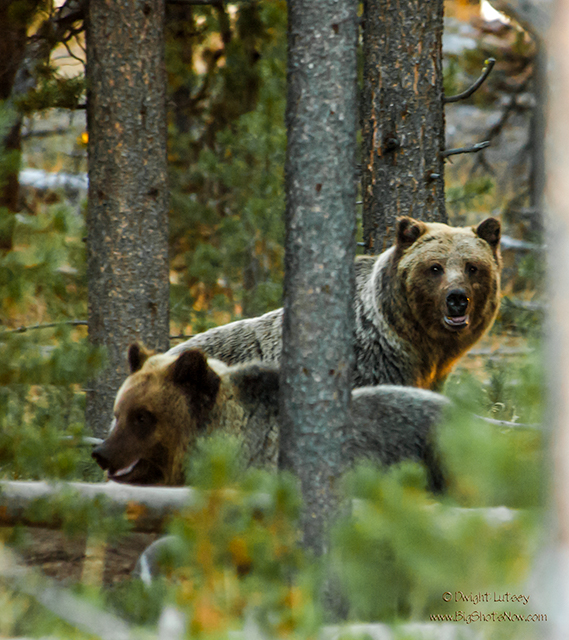 BearFacts2512